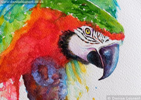 Harlequin Macaw detail