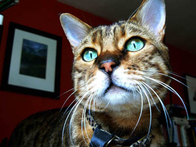 The photo of Charlie gazing out of the window. This is the expression I want to capture.
