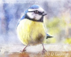 cheeky-blue-tit.jpg