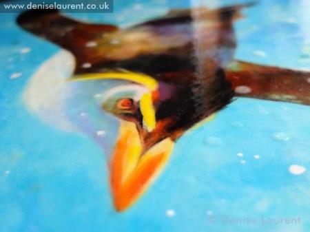 diving-rockhopper-detail3